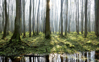 Forests as a climate solution? Yes, naturally