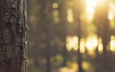 A climate and business solution in one? Sustainably managed forests may be the answer