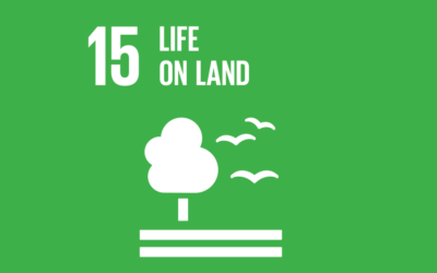 Guide to the SDGs: SDG15 – Life on Land