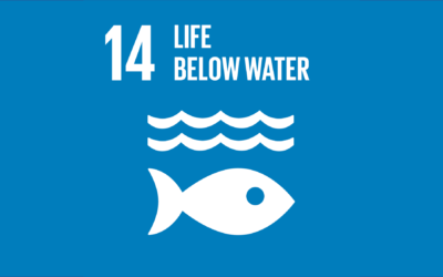 Guide to the SDGs: SDG14 – Life Below Water