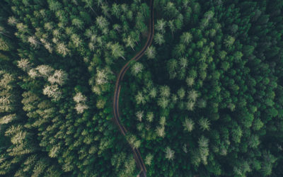Forests and their Linkages across the SDGs