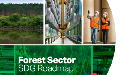 SDG Deep Dive Webinar – Maximizing SDG impact in the forest sector (Session 2)