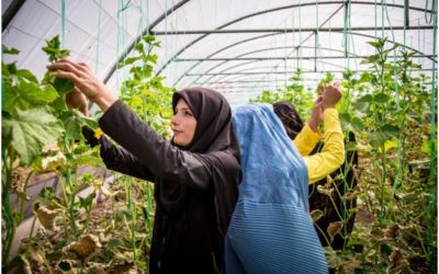 SDGs: Accelerating Action & Transformative Pathways through Nature-based Solutions