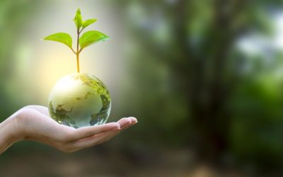 Transforming Sustainability Into A Competitive Advantage