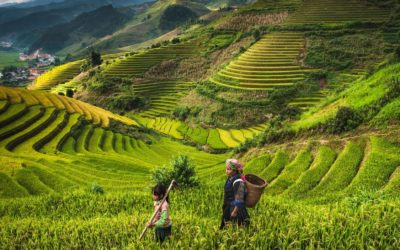 SDGs can guide Asia and the Pacific to build back better, says UN report
