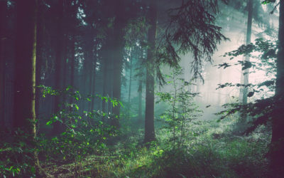 'Make-or-break moment' for forests